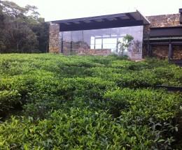 The Rainforest Ecolodge Deniyaya, Sri Lanka